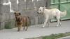 Výzva pre majiteľov psov!