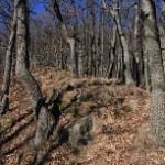 Dubový les v lokalite Hanuščákova lúka